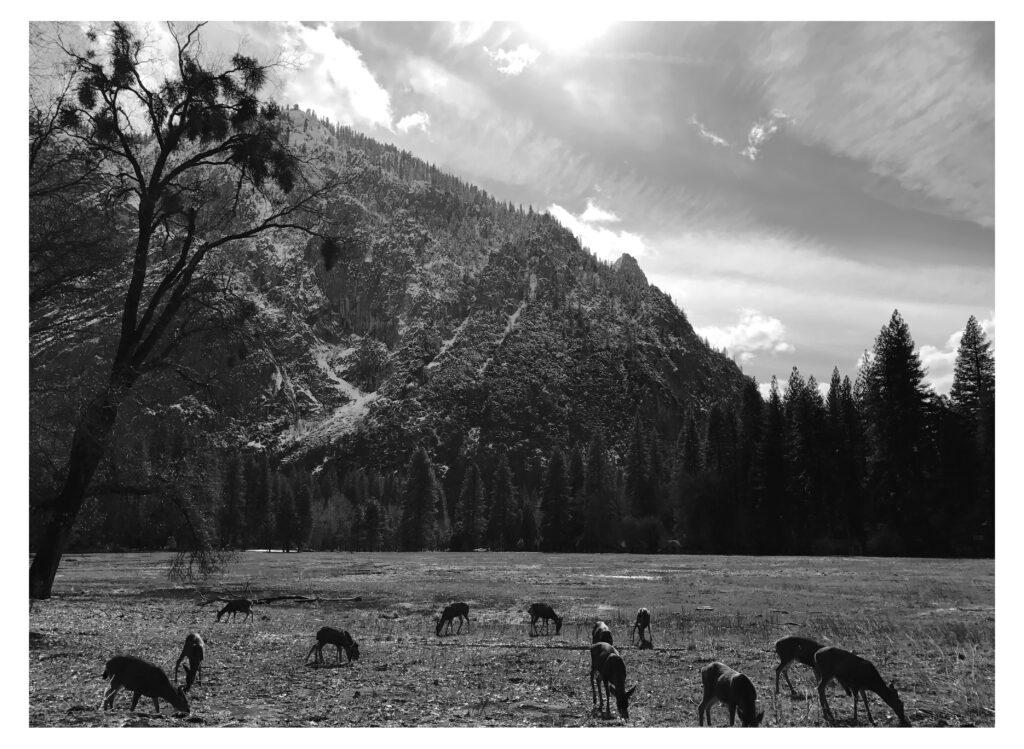 Yosemite by eye94